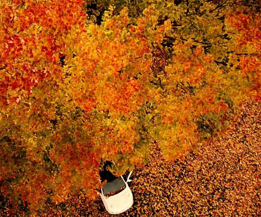 Осень-это последняя и самая яркая улыбка года.